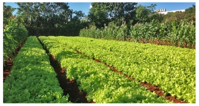 Sustainable agriculture in Cuba