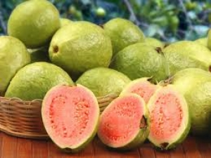 Guayaba (The Guava)